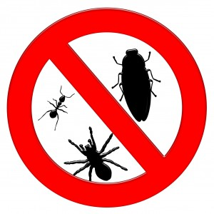 Dallas Pest Control for Homeowners