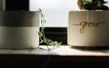 These Indoor Plants Can Improve Your Home's Air Quality