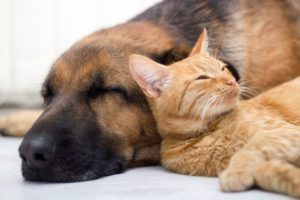 dog and cat sleeping